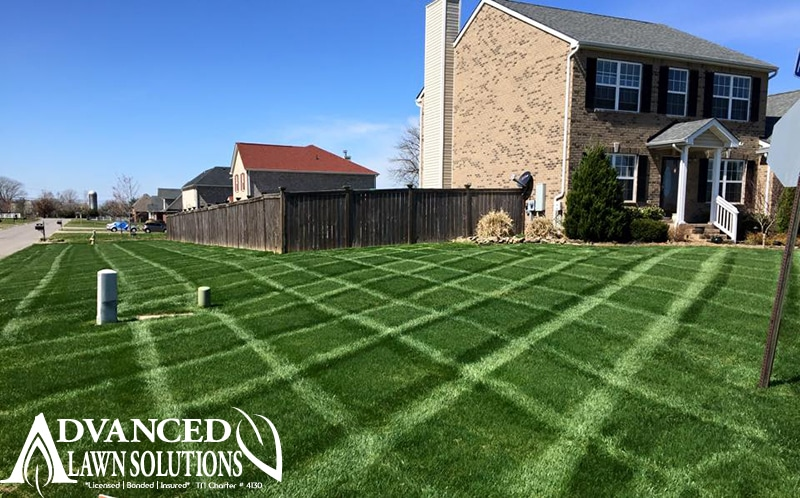 seeding image - Advanced Lawn green lawn photo- striped lawn - seeding