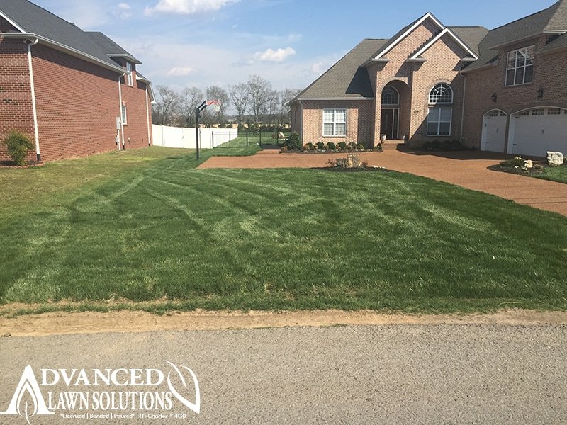 seeding image - Advanced Lawn Comparison Photo - seeding