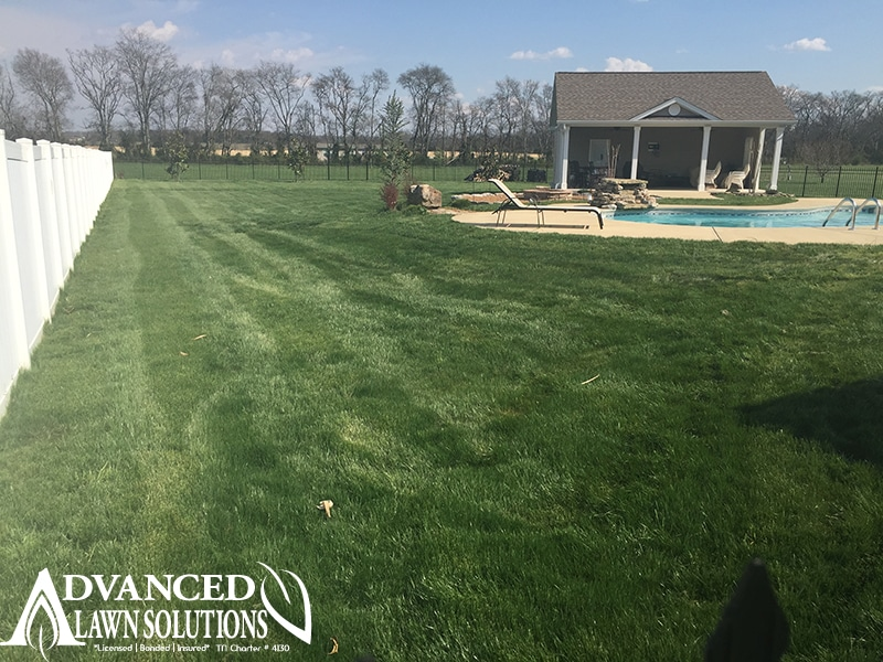 seeding image - lush green lawn backyard and pool - seeding