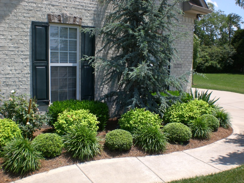 Advanced Lawn groomed landscape bushes and trees