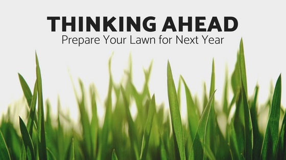 Thinking Ahead, Prepare Your Lawn for Next Year!