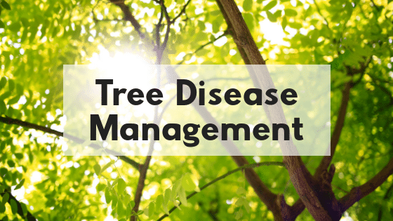Tree Disease Management