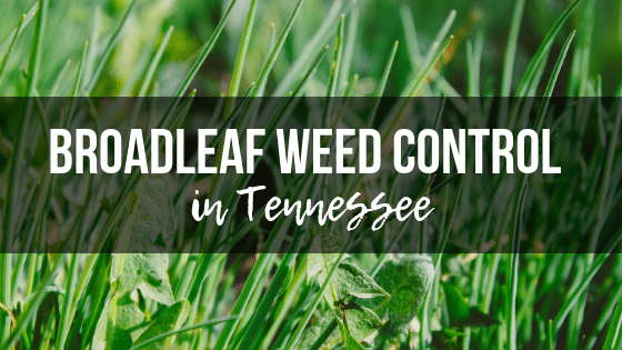 Broadleaf Weed Control in Tennessee