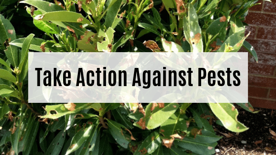 Take Action Against Pests