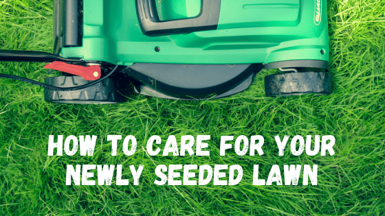 How to Care for Your Newly Seeded Lawn
