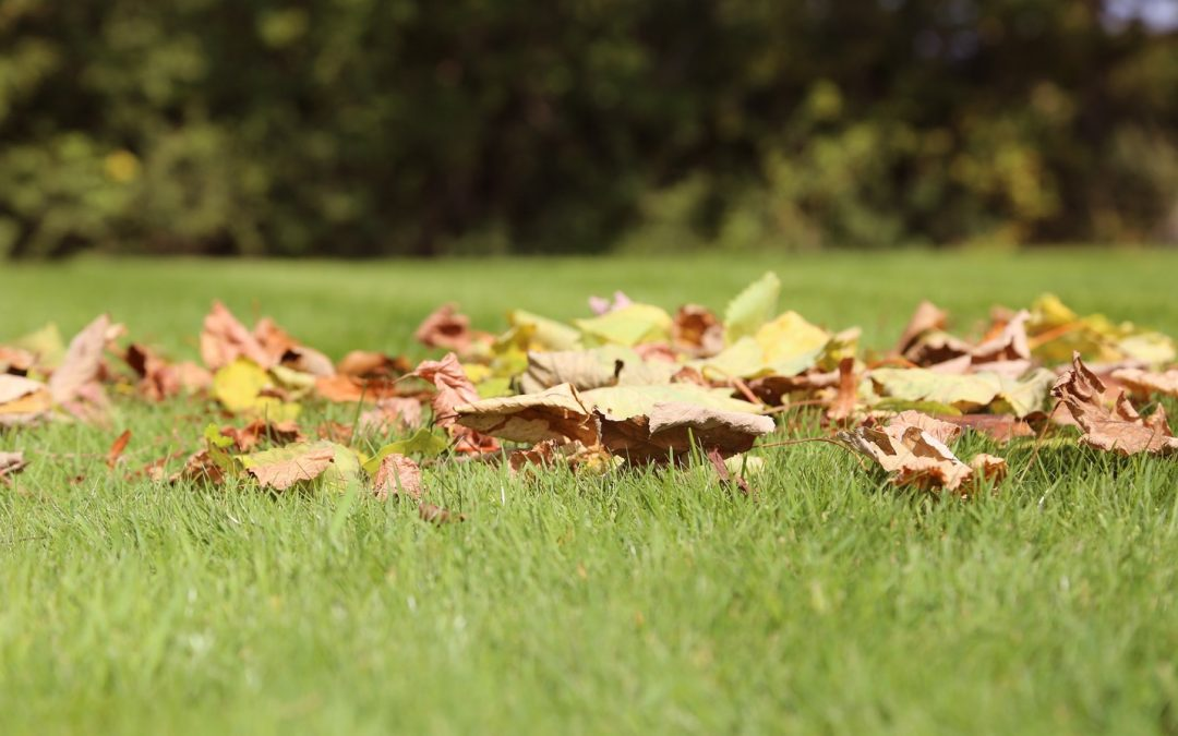 Lawncare Tips for Fall