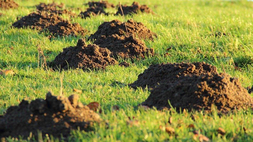 Pest Control: Moles