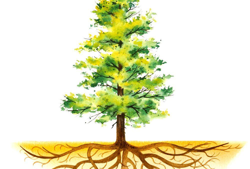 Benefits of Deep Root Feeding