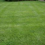 advanced lawn lush green lawn